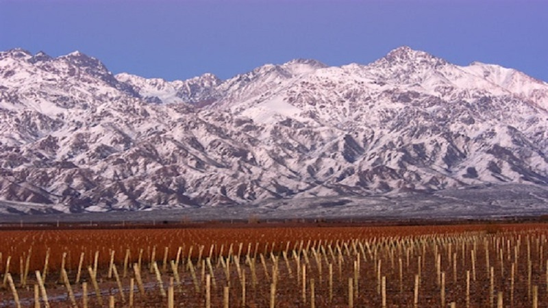 High-Altitude-Vineyard-Argentina-Wine