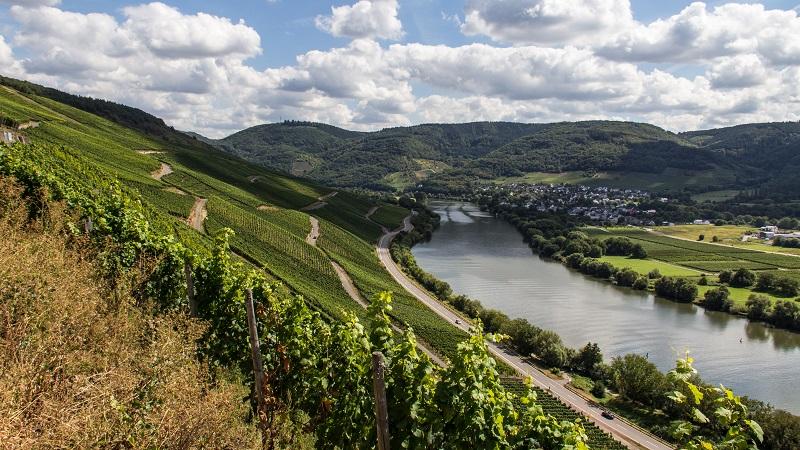 vineyard-mosel-valley