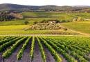 Тиквешки вински пат води кон развој на винскиот туризам