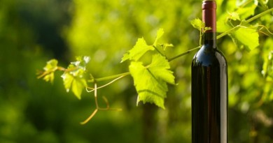 Organic_and_biodynamic_wine_production_facts_2 []