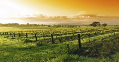 retiring-vineyards_1