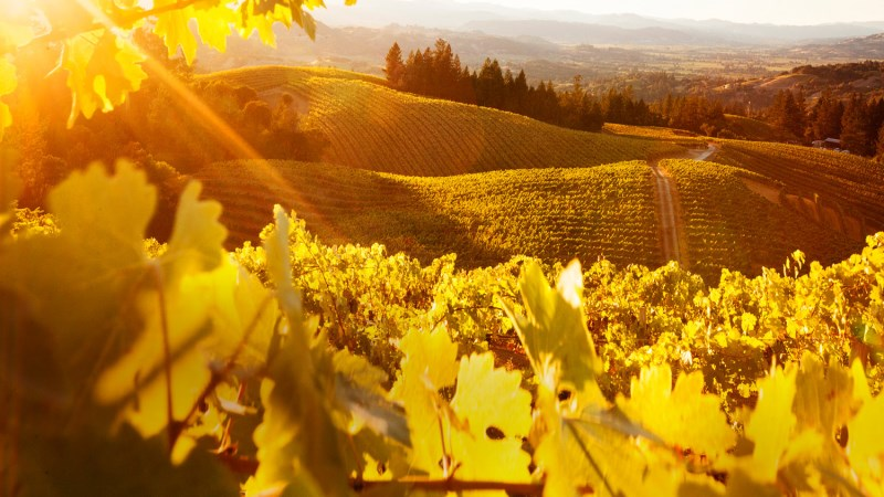 vineyards-header