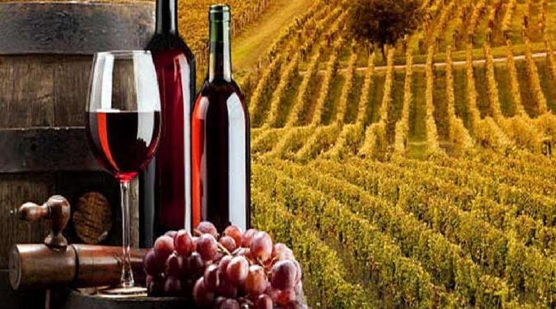 vino-lozje-1