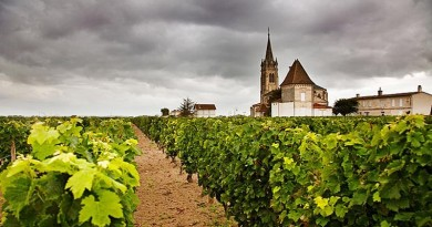 Vineyards_in_Chate_1876328a