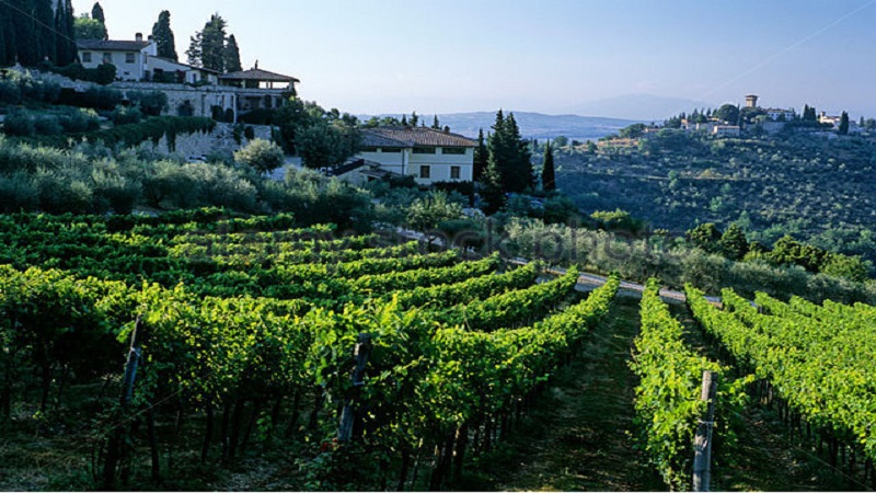verrazzano-vineyard-and-the-castello-di-vicchiomaggio-chianti-florence-b62b76