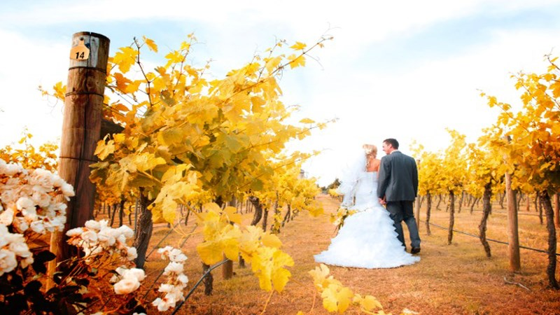 witchmount-vineyard-wedding