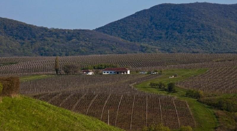 vinograd-696x464