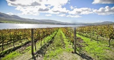 Нов Зеланд го крие совршениот совињон бланк