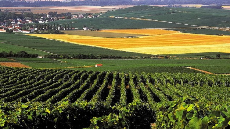 A3G705 France Champagne Champagne Vineyards Near Epernay
