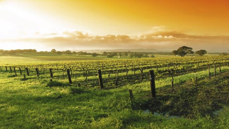 retiring-vineyards_1