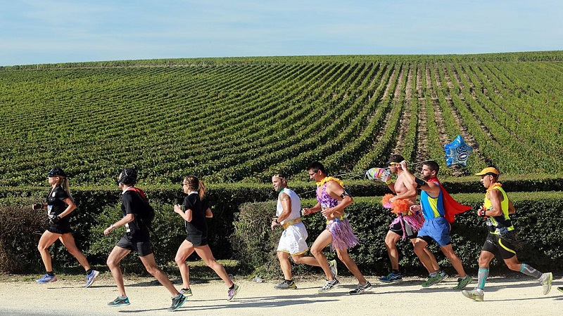 marathon_du_medoc_vineyard